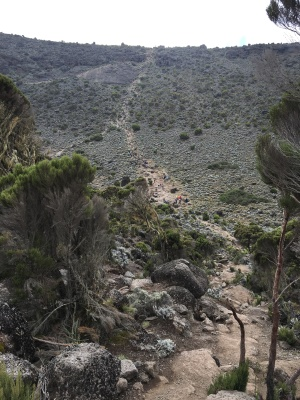 The Marangu route of kilimanjaro