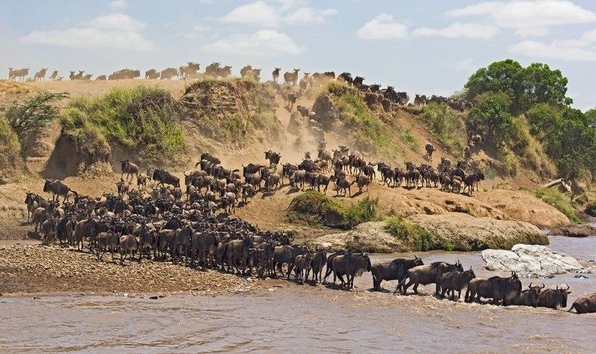 africa-safaris_tanzania-greatmigration.jpg